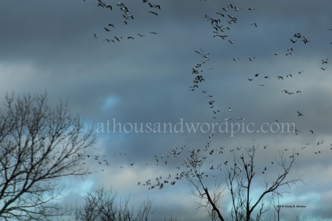 WATERMARKED BIRDS posted