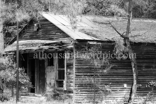 WATERMARKED GENERAL STORE posted