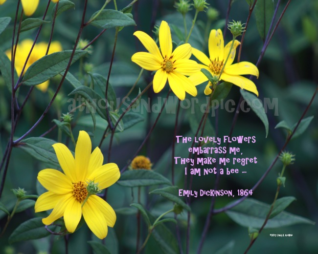 WATERMARKED LOVELY FLOWERS posted