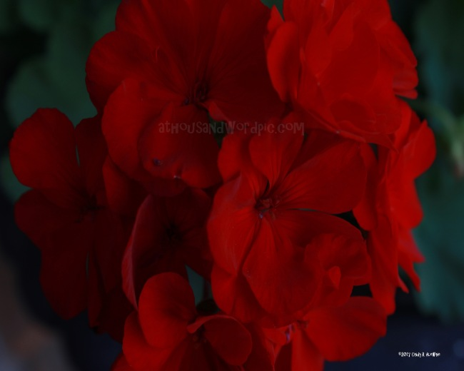 WATERMARKED RED FLOWERS